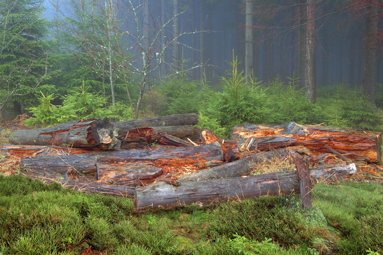 Soonwald: natural forestry where dead wood plays an important role (Nahe Valley)
