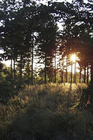 Soonwald summer: memorable sunset on the Wildburghöhe mountain («Soonwald» Forest)