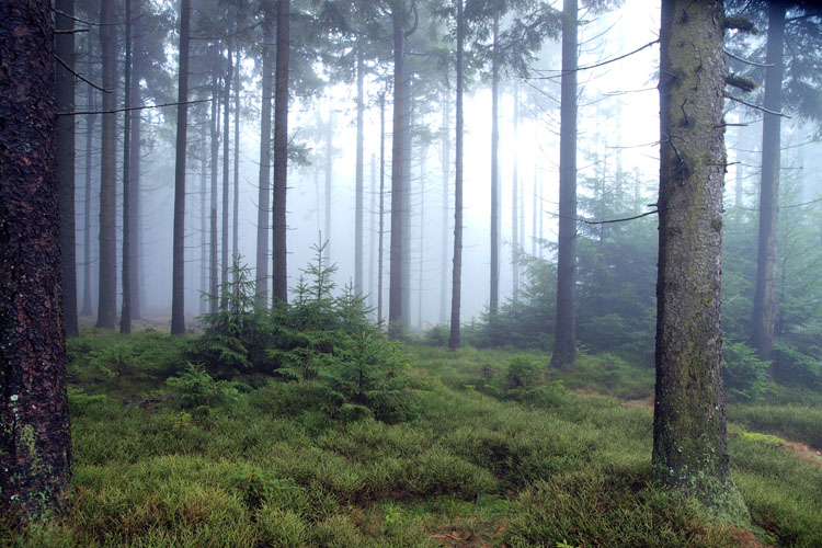 Idarwald: Wet fog in late autumn foreshadows winter («Idarwald» Forest)